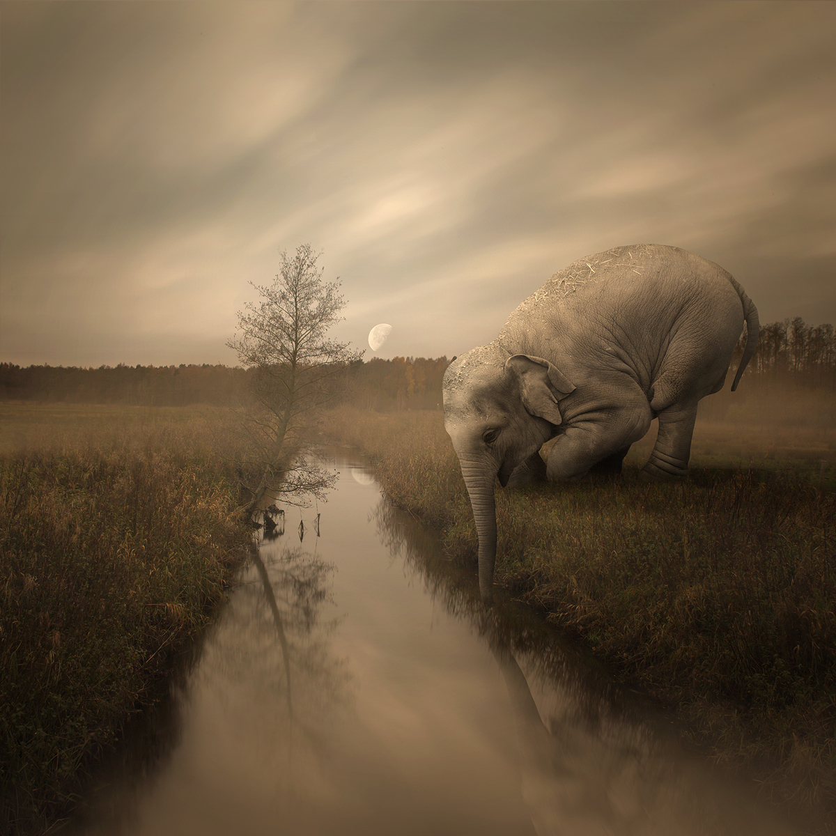 fine art prints, photo manipulation, digital art, poland
