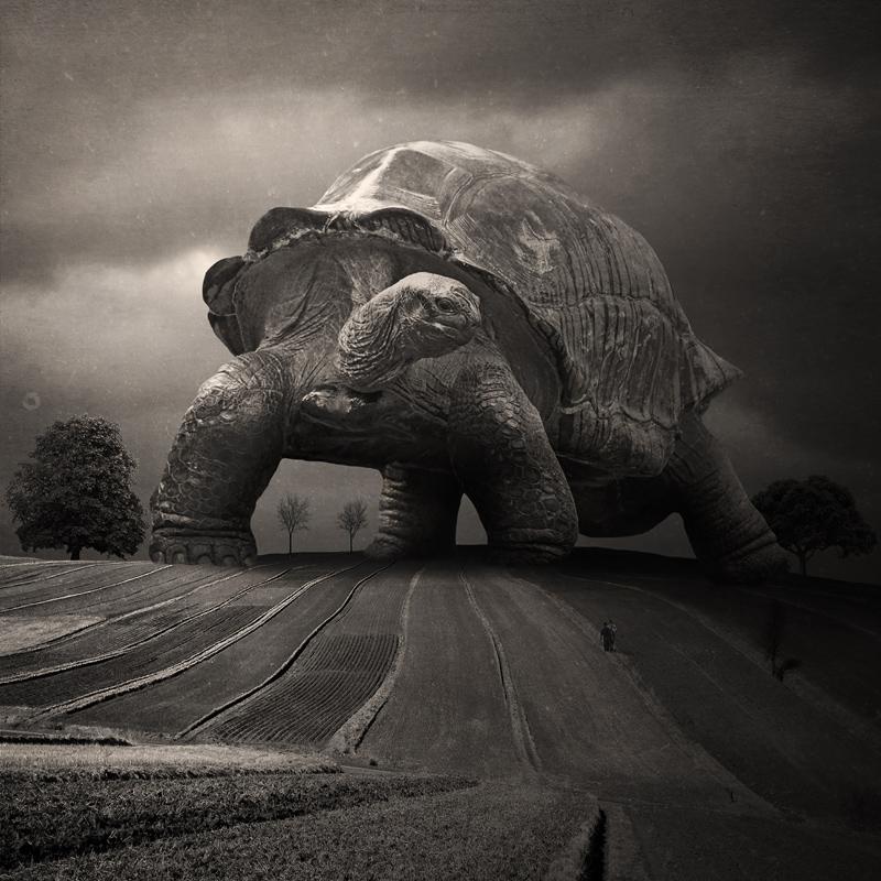 plakat zwierzęta black and white, czarno biały, wystrój wnętrz, home design, art, design, digital art, fine art print, fotografia, fotografia artystyczna, fotomontaż, ozdoba domu, photo manipulation, photography, photomontage, photoshop, poster, prezent, print, surrealism, surrealizm, sztuka, wydruk