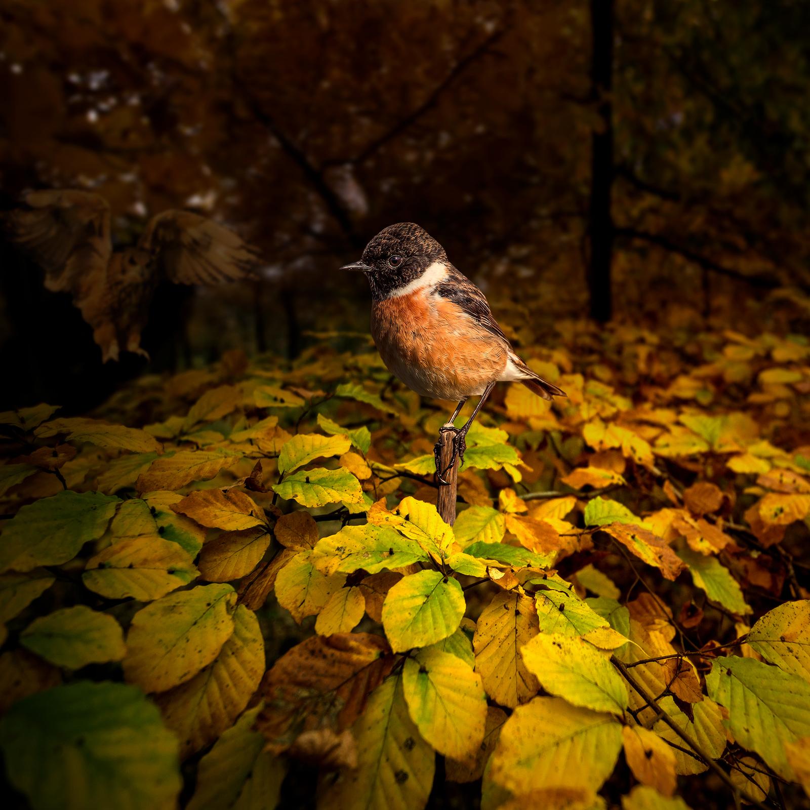 kolory jesieni fotografia