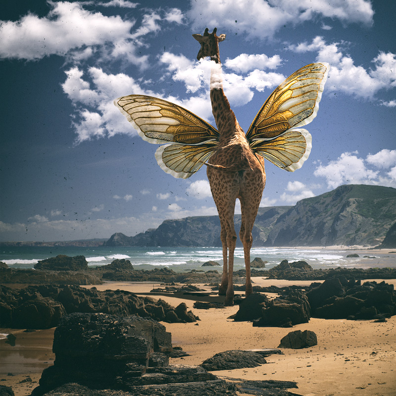 żyrafa, art, design, digital art, fine art print, fotografia, fotografia artystyczna, fotomontaż, gift, ozdoba domu, photo manipulation, photography, photomontage, photoshop, poster, prezent, print, surrealism, surrealizm, sztuka, wydruk