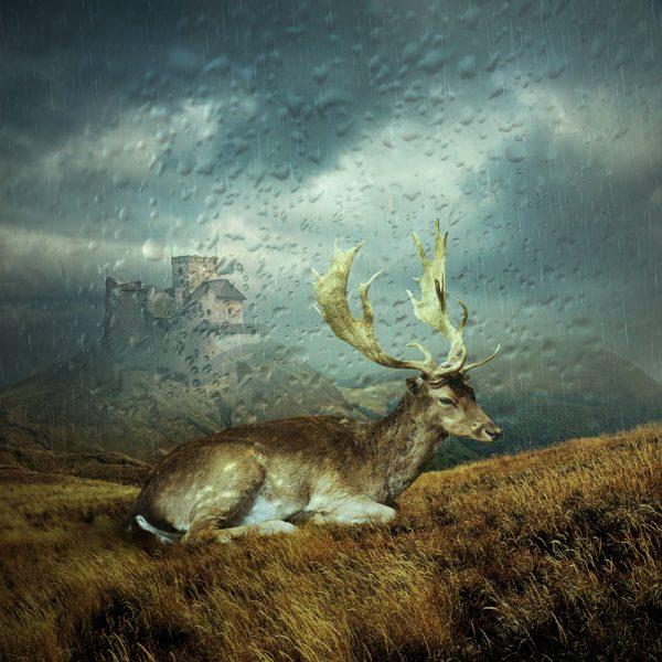 fotomontaż, fotografia abstrakcyjna
