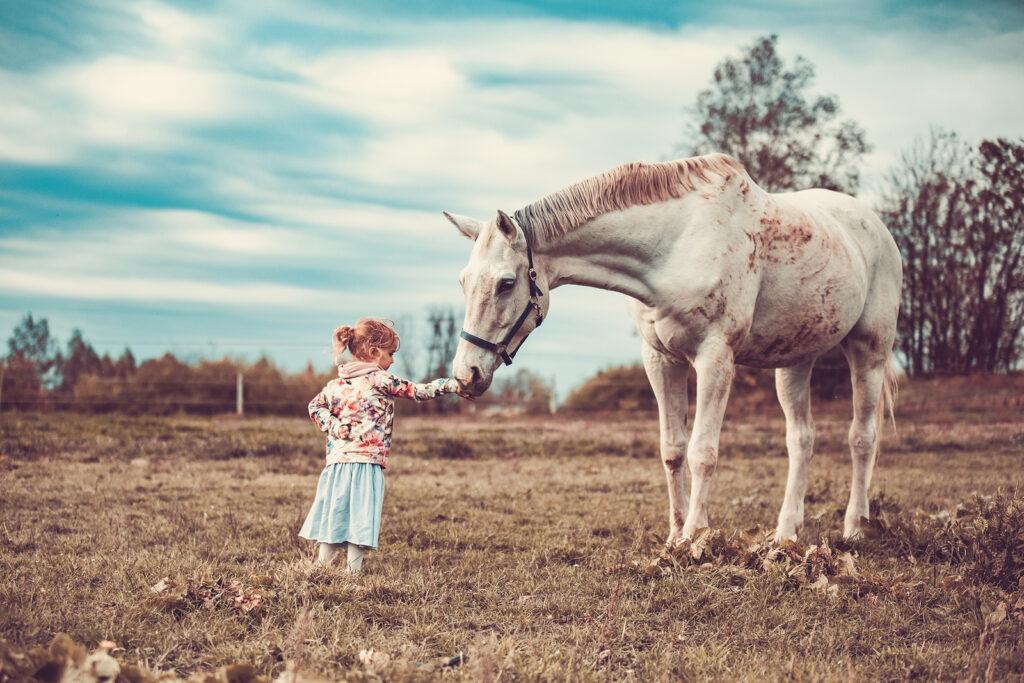 konie, najlepsi przyjaciele
